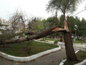 Kuşadası'nda fırtına yüzünden ağaçlar devrildi