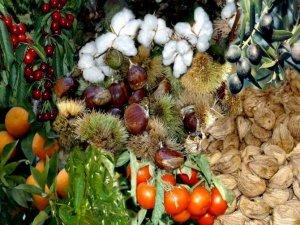 Aydın'da çiftlik muhasebe veri ağı büyüyor