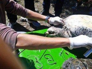 35. Uluslararası Deniz Kaplumbağaları Sempozyumu Sona Erdi