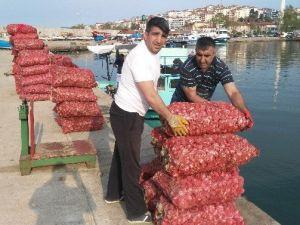 Balıkçıların Gözdesi Deniz Salyangozu Oldu