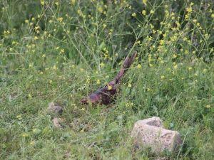 Gaziantep'te Kesilmiş Kadın Bacağı Bulundu