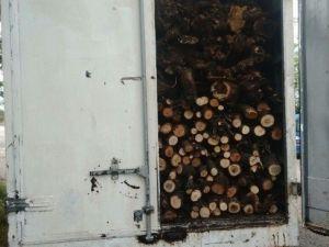 Diyarbakır'da 1 Kamyon Dolusu Kaçak Kesilmiş Ağaç Ele Geçirildi