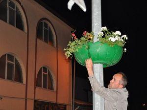 Niksar'da Caddeler Sardunya İle Renklendi