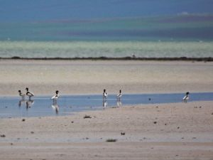 Seyfe Gölünde Kuş Sayısı Artıyor