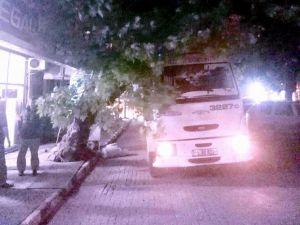 Dikkatsiz Sürücü, Çınar Ağacına Çarptı