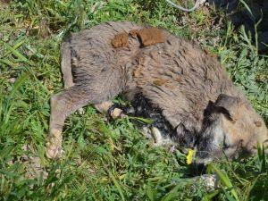 Eskişehir'de Toplu Hayvan Mezarı İddiası