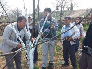 Beyşehir'de Meyve Yetiştiricilerine 'Kara Leke' Uyarısı