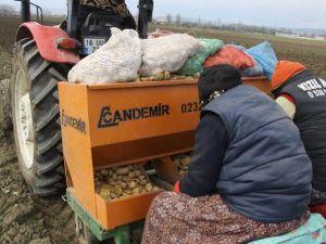 Patates Üreticileri Tedirgin