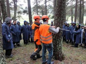 Orman Fakültesi Öğrencileri Dersi Ormanda Yaptılar