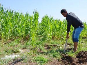 Dicle Elektrik, Çiftçiler Günü'nü Kutladı