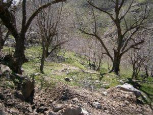 Ceviz Ağaçlarındaki Hasar, Karların Erimesi İle Ortaya Çıktı