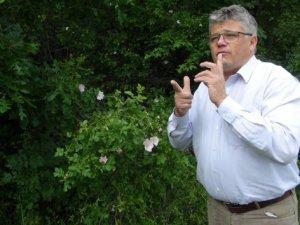 Kanser ve romatizmaya karşı arı zehiri tedavisi