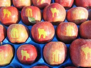 Logolu Elma Çalışmaları Sürüyor