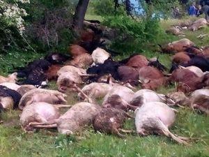 Dursunbey'de Yıldırım 45 Küçükbaş Hayvanı Daha Telef Etti
