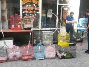 Tatvan'da Muhabbet Kuşuna İlgi Her Geçen Gün Artıyor