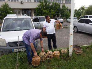Iğdır'da Kaçak Keklik Avcısına Ceza