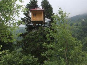 Gürgen Ağacının Tepesinde Ev Kurdu