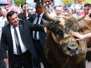 İspanya Değil Artvin