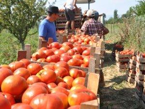 Hava şartları domatesi vurdu