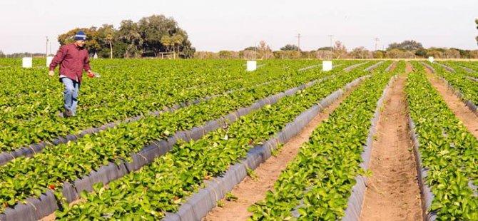 Aydın'da bin 82 çiftçiye afet yardımı