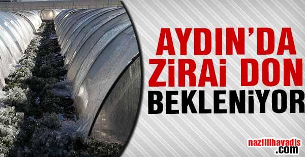 Aydın'da Zirai don bekleniyor!
