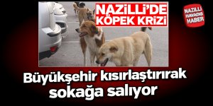 Nazilli'de köpek krizi