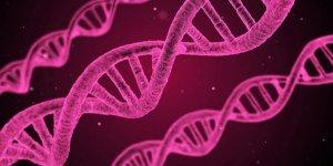 Kanser tedavisinde DNA nanorobotları devrede