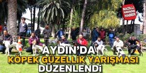 Aydın'da köpek güzellik yarışması düzenlendi