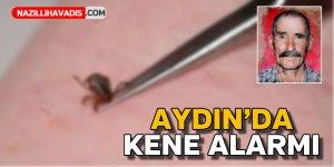 Aydın'da kene alarmı