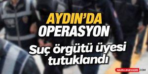 Aydın'da suç örgütüne operasyon