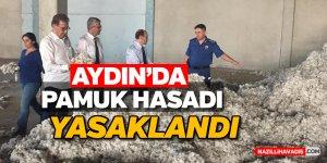 Aydın'da pamuk hasadı yasaklandı