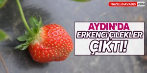 Aydın'da Erkenci çilekler  çıktı!