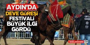 Aydın'da deve güreşi festivali