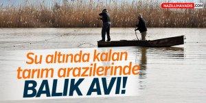 Su altında kalan tarım arazilerinde balık avı!
