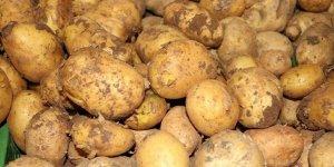 Patatese Vergi Süprizi