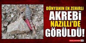 Dünyanın En Zehirli Akrebi Nazilli'de Görüldü!