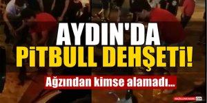 Aydın'da Pitbull Dehşeti!