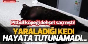 Pitbull'un yaraladığı kedi öldü...