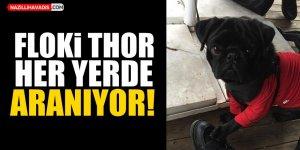 Floki Thor her yerde aranıyor!
