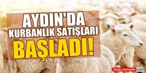 Aydın'da kurbanlık satışları başladı!