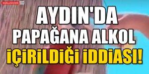 Aydın'da papağana alkol içirildiği iddiası!