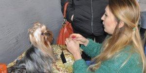 Aydın'da 422 köpeğin değerlendirileceği ırk yarışması başladı...