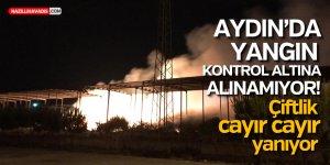 AYDIN'DA ÇİFTLİK CAYIR CAYIR YANIYOR!