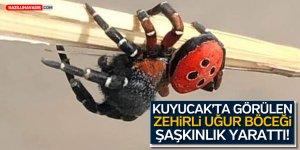 Kuyucak İlçesinde Görülen Zehirli Uğur Böceği Şaşkınlık Yarattı