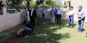 Aydın'da camilerin yeniden ibadete açılmasından dolayı kurban kesildi