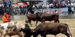 Boğa Güreşi Şenlikleri İspanyayı Aratmadı