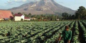 Endonezya'da Sinabung Yanardağı harekete geçti