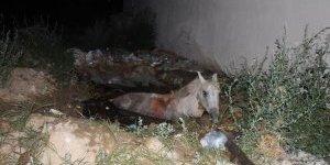 Lağım çukuruna düşen at vinçle kurtarıldı