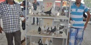 Güvercin Festivali'nde buluşuyorlar