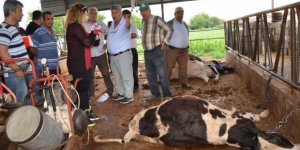 AYDEM, çiftçinin zararını karşıladı